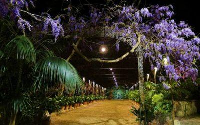 Visita nocturna al Jardín de La Concepción
