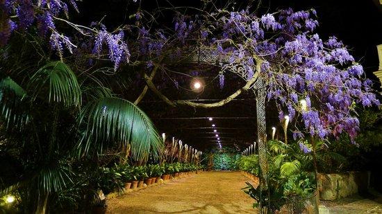 Night visit to the Garden of 'La Concepción'