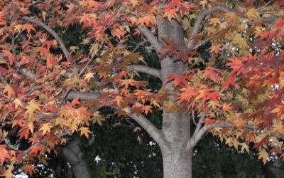 La vuelta al mundo en 80 árboles del Jardín de la Concepción