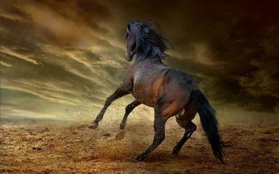 Los caballos cimarrones de Málaga