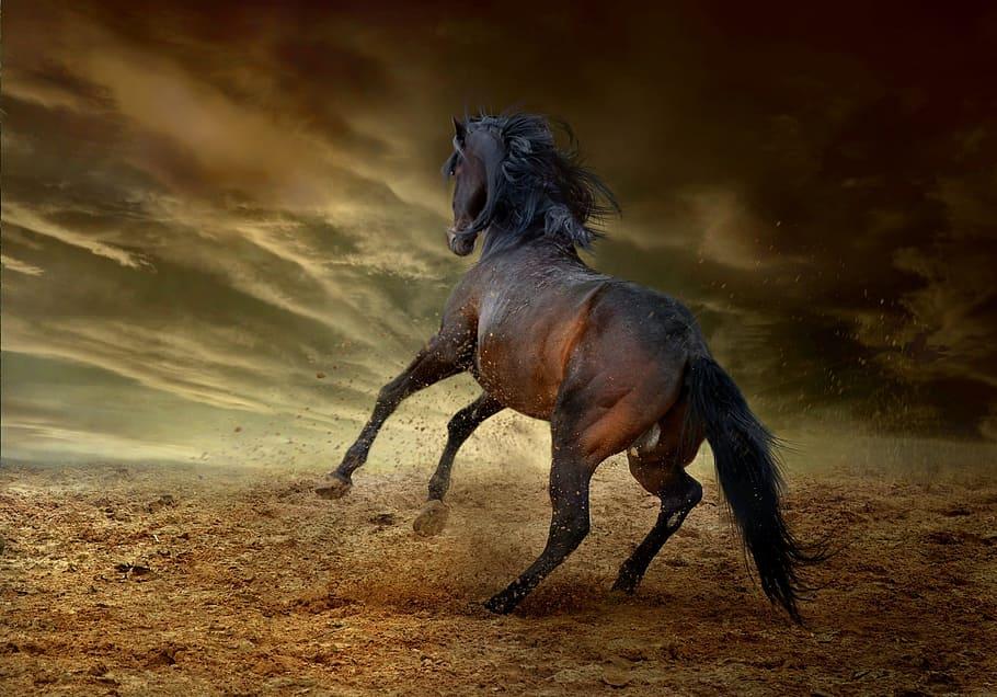 The mustang horses of Malaga